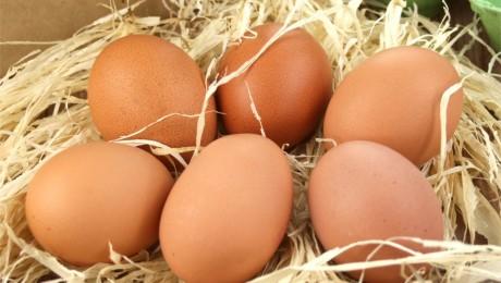 Eggs lying on straw
